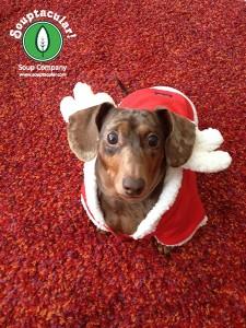 Our dog, Samson, looking festive, yet concerned.